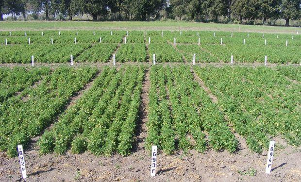 Producción de forraje y persistencia de cultivares de alfalfa de diferente grado de reposo invernal en suelos molisoles de Entre Ríos.