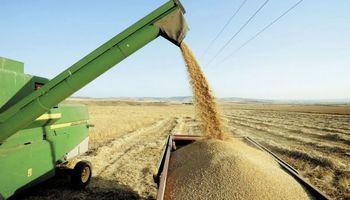 Sube producción de cereales en países en desarrollo