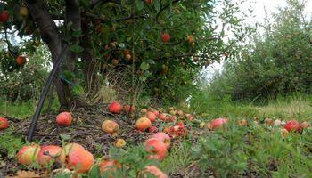 Retroceso del 20% para la producción de frutas