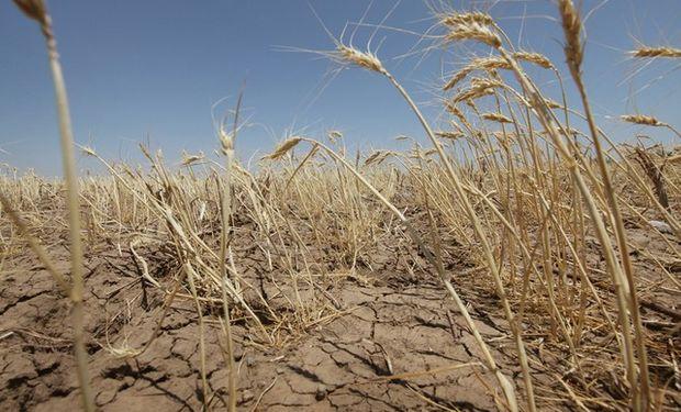 La producción de trigo en Australia podría verse afectada.