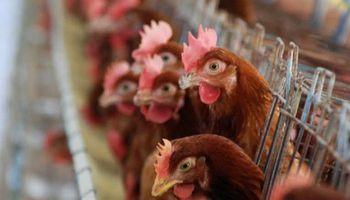 Pronostican para 2015 una suba del consumo avícola