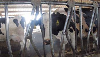 La producción lechera en ajuste