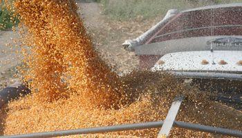 22,4 millones de toneladas de maíz 2014/15