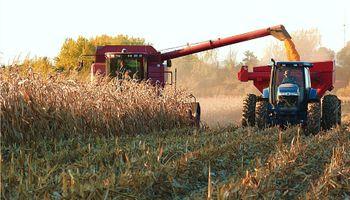 Pausadamente comienza a cosecharse el maíz