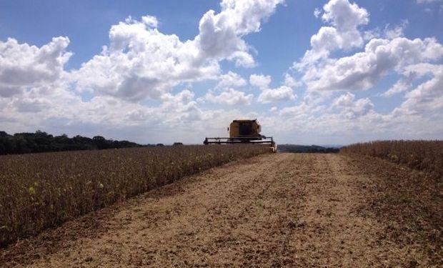 Los productores en nuestro país lentamente comienzan la recolección de la oleaginosa con la idea de vender solo lo necesario.