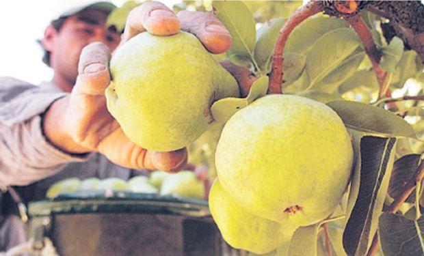 Según denunciaron, diversos factores son los que han dañado a la industria frutícola