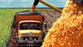 Proyectan alza en la producción global de maíz