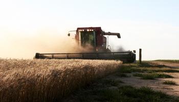 Producción mundial de granos decrece luego de alcanzar récord