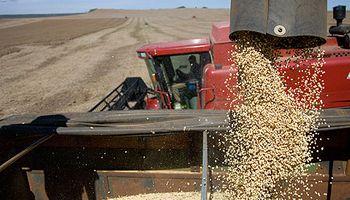 Elevan estimación de producción mundial de soja