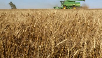 Pronóstico récord para la cosecha mundial de trigo