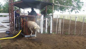 Buenos Aires: aprueban 10 proyectos de producción ovina por $3,5 millones
