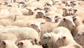 Crece producción ovina en Buenos Aires