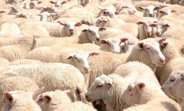 En el territorio bonaerense se encuentran todas las razas ovinas que existen en la Argentina.