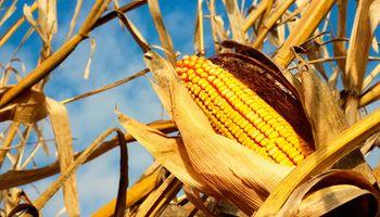Tiempo seco afecta los cultivares de la Unión Europea