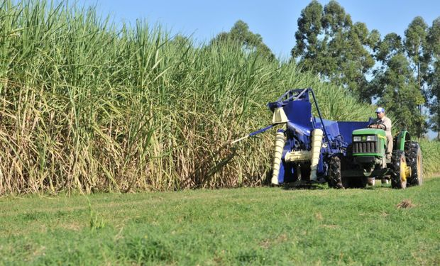 El sector de producción de azúcar y etanol de caña en el Noroeste argentino resulta indispensable para el desarrollo territorial de esa región.