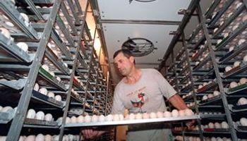 Productores de huevos furiosos por quedar fuera de la rebaja del IVA