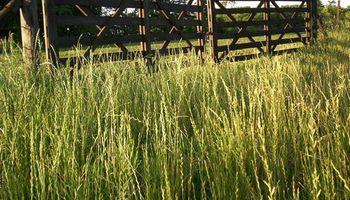 Ventajas para el productor rural: flexibilizan plan de facilidades de pago