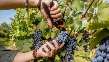 Vid, olivo, nogal y frutas de pepita y carozo: una encuesta relevó las expectativas que tienen las empresas agropecuarias cuyanas