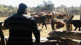 De nuevo: la incertidumbre sobre las políticas agropecuarias frena la recuperación en la confianza de los productores