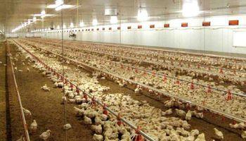 Productores avícolas alertan por la suba de costos