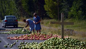 Productores de fruta volverían a cortar