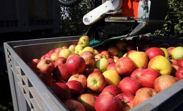 Quedaron unos 200 millones de kilos de frutas sin cosechar debido a la falta total de rentabilidad.