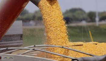 Fastidio de productores por el atraso en la devolución del IVA