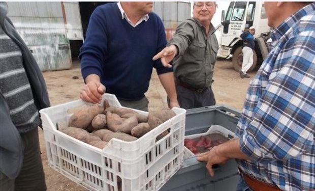 Los productores prueban prototipo para hortalizas