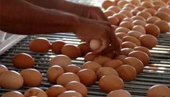Productores de huevo dicen que ya se licuó el efecto de la devaluación