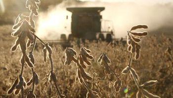 """""""Los productores están encarando la campaña 2014/15 con el objetivo de sobrevivir"""""""