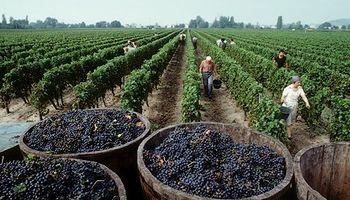Productores de uva y vino marchan en reclamo de ayuda oficial