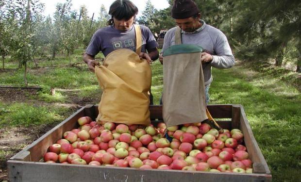 Mayores disparidades de montos en la cadena durante el mes fueron de 19,95 veces para la pera, seguido por la manzana roja.