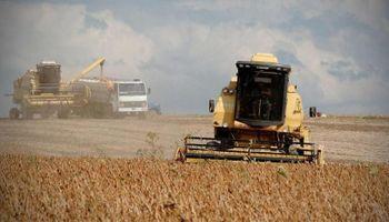 El 60% de las exportaciones de la primera mitad del año fueron productos del campo