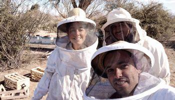 """Beeflow: la agtech argentina que """"entrena"""" abejas consiguió una millonaria inversión"""