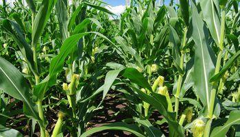 Se deteriora la calidad de los cultivos en Estados Unidos
