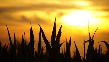 Las previsiones de lluvia no son auspiciosas para zonas en sequía de la provincia de Córdoba, el oeste de Santa Fe y el NEA