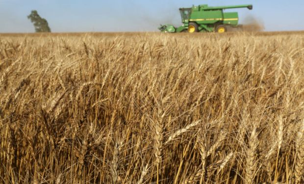 CIC estima una mayor producción de trigo y maíz