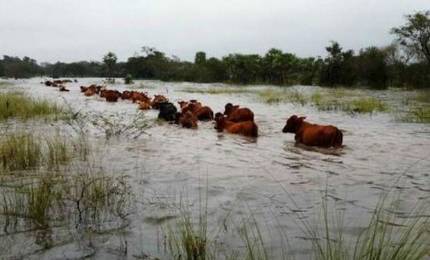 General Villegas tiene el norte de su partido otra vez inundado.