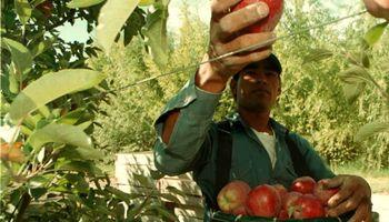 Productores frutícolas bloquean plantas de YPF en reclamo de mejoras