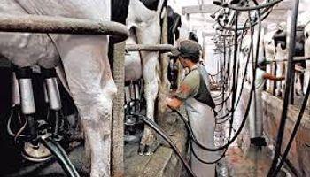 Semana clave para tamberos por el precio de la leche