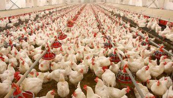 Debaten la necesidad de reprogramar las exportaciones avícolas