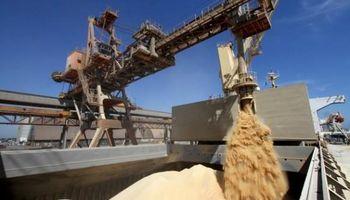 Demanda brasilera de trigo: un análisis de las últimas campañas