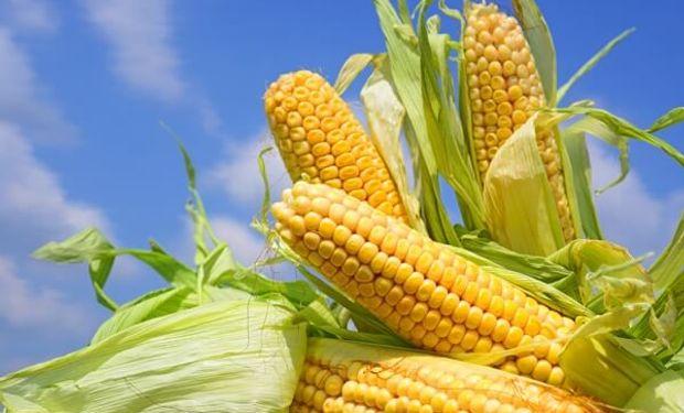 Las principales líneas de investigación del laboratorio tienen que ver con distintos tipos de manejos de maíz, soja y sorgo.