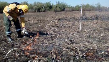 Quema en islas: evalúan el efecto del fuego en la regeneración del pastizal