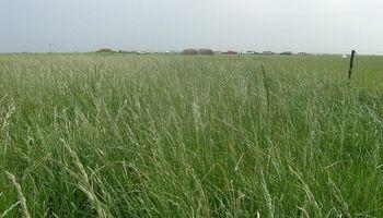 El Instituto de Semillas inscribió ocho variedades de cultivos