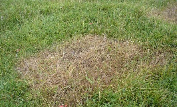La cría de ganado en la región se desarrolla sobre suelos bastante pobres en cuanto a materia orgánica y nutrientes.