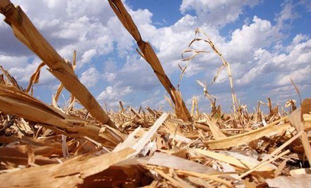 Sin el maíz la soja termina siendo inviable
