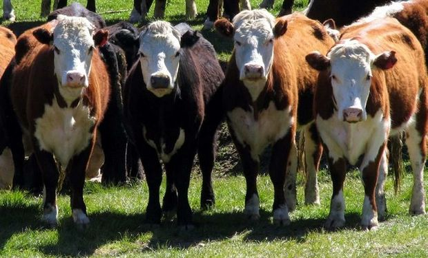 La cadena de ganados y carnes en Argentina se mueve al compás de las expectativas.