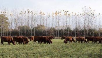 La recría, con alto potencial para crecer en zonas semiáridas