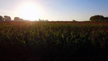 Leve rebote para el maíz en Chicago luego de operar en mínimos de 10 años